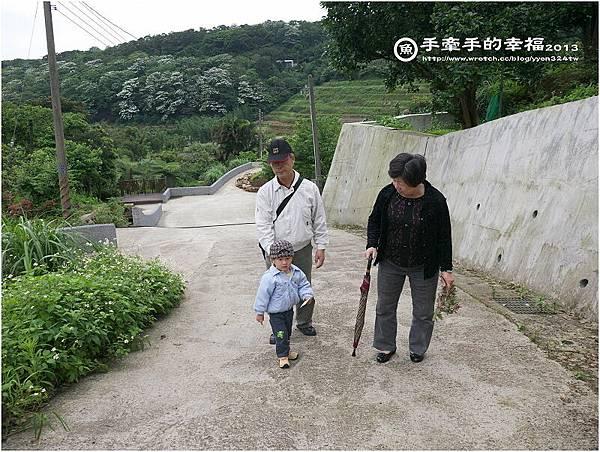 三芝桐花130502010