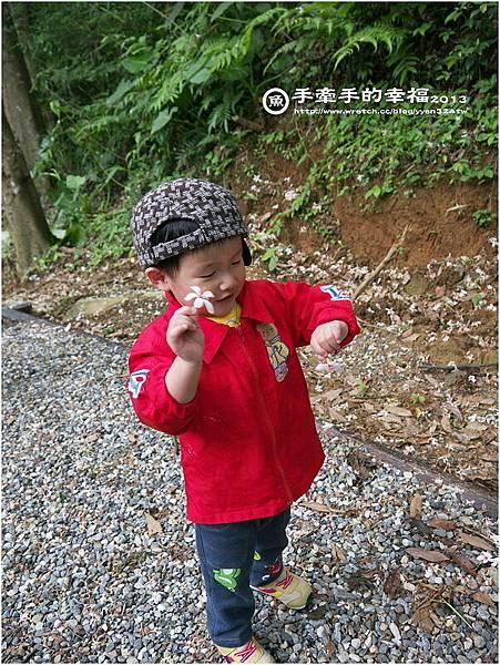 三芝桐花130502016