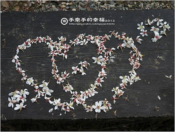 三芝桐花130502026