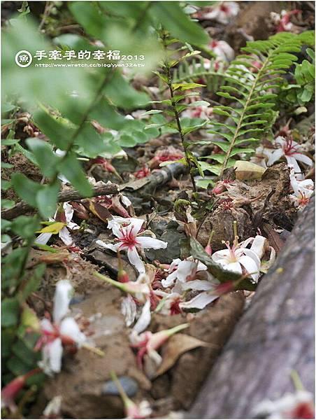 三芝桐花130502025