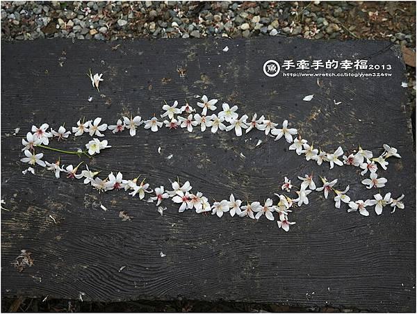 三芝桐花130502030
