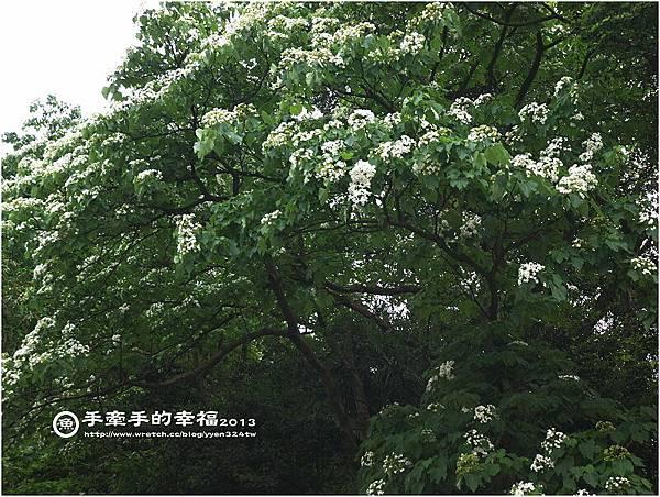 桐花公園130426002