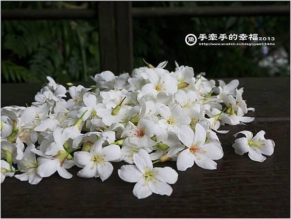 桐花公園130426007