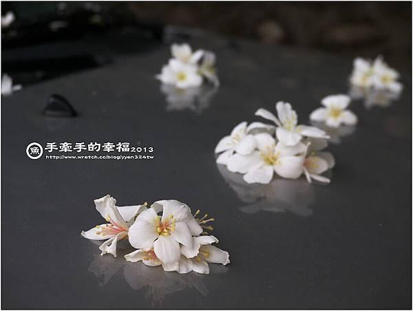桐花公園130426011