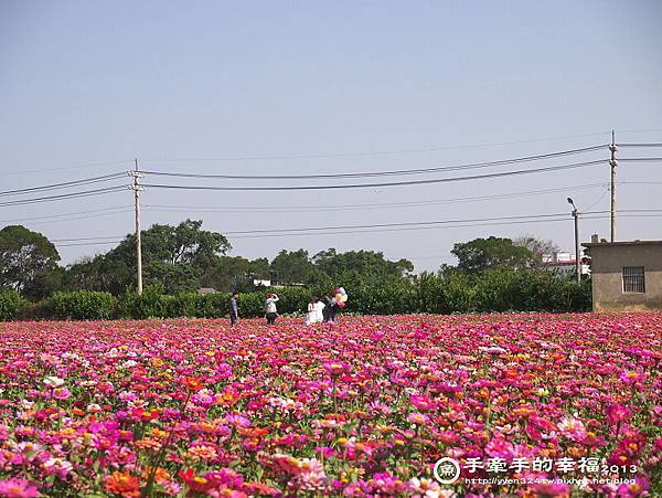 楊梅花海131118006