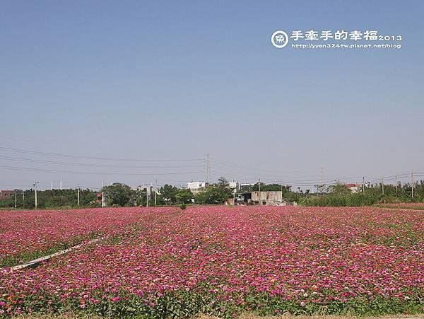 楊梅花海131118007