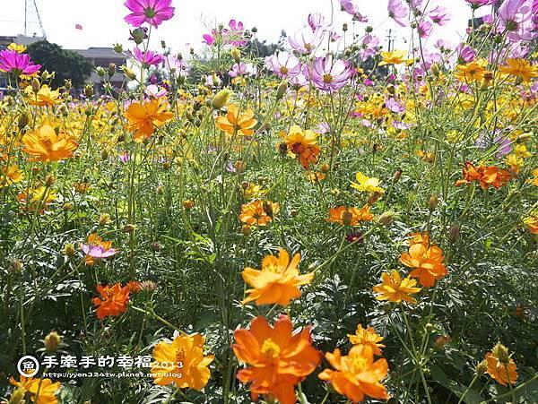 楊梅花海131118011