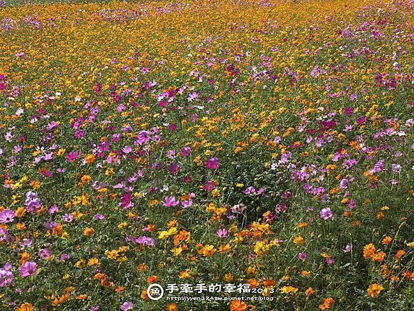 楊梅花海131118012