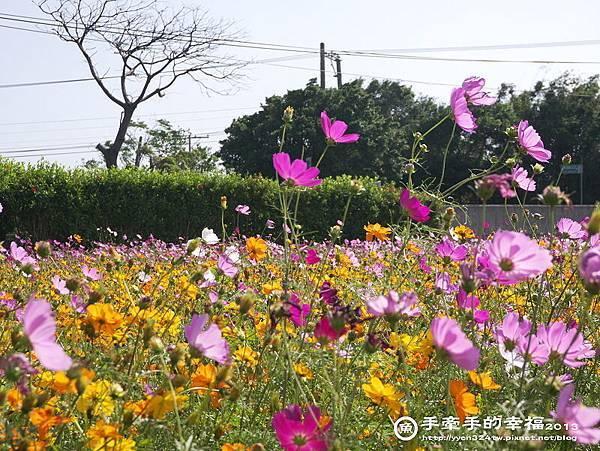 楊梅花海131118016