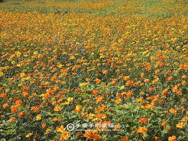 楊梅花海131118021