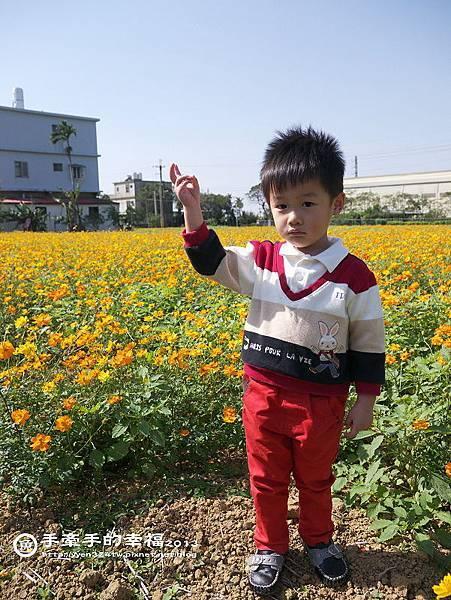 楊梅花海131118024