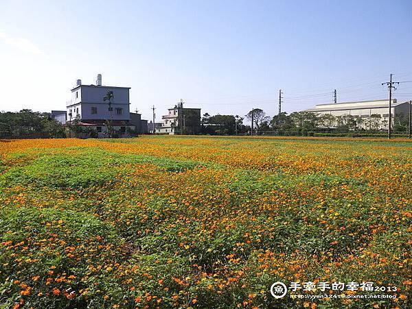 楊梅花海131118026