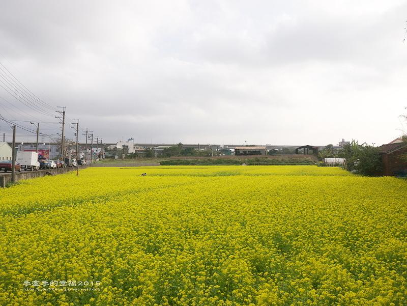 桃園花海150129012