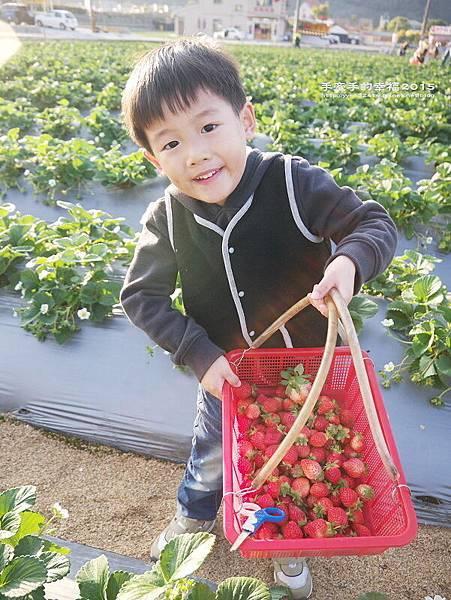春香草莓園150201006