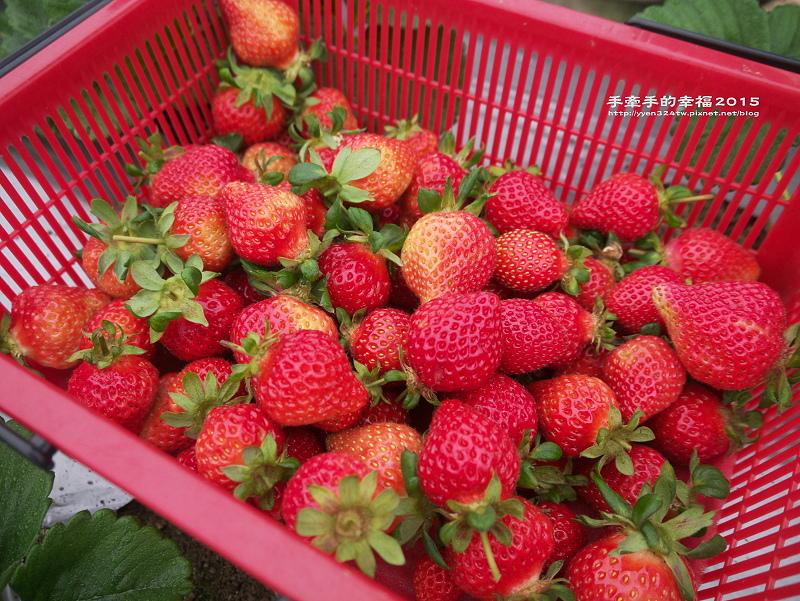 無名草莓園150223001