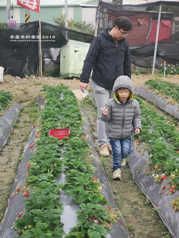 無名草莓園150223010