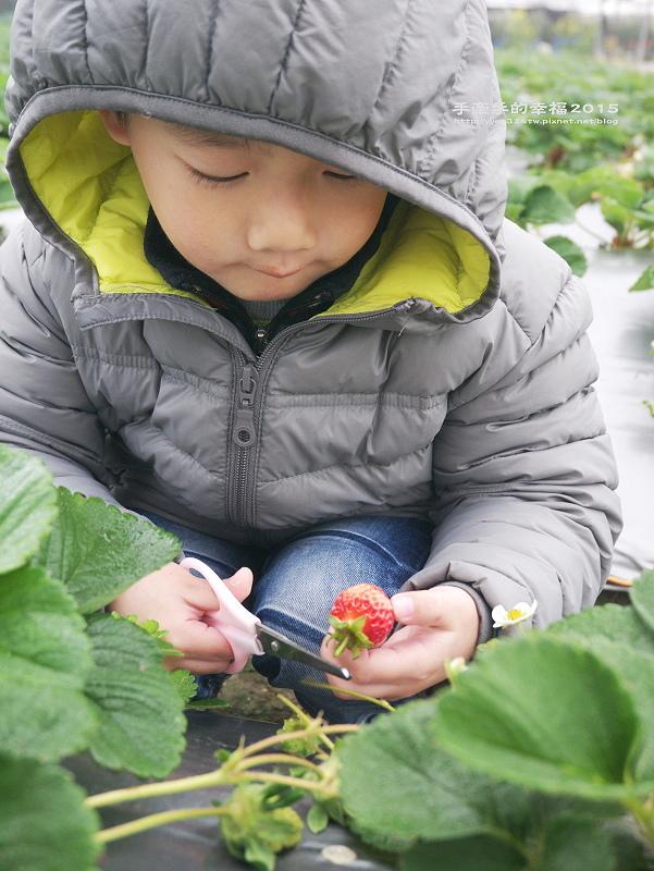 無名草莓園150223011
