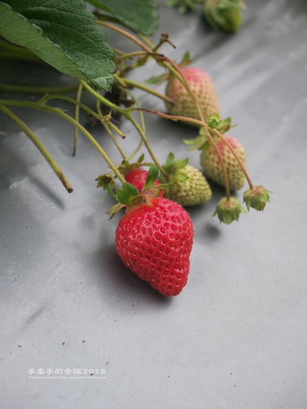 無名草莓園150223012