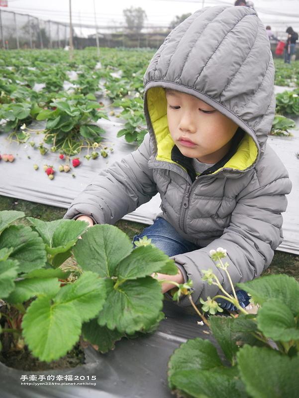 無名草莓園150223013
