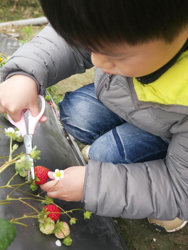 無名草莓園150223014
