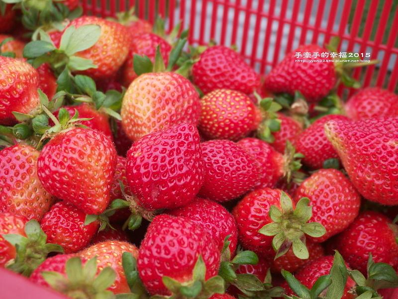 無名草莓園150223015