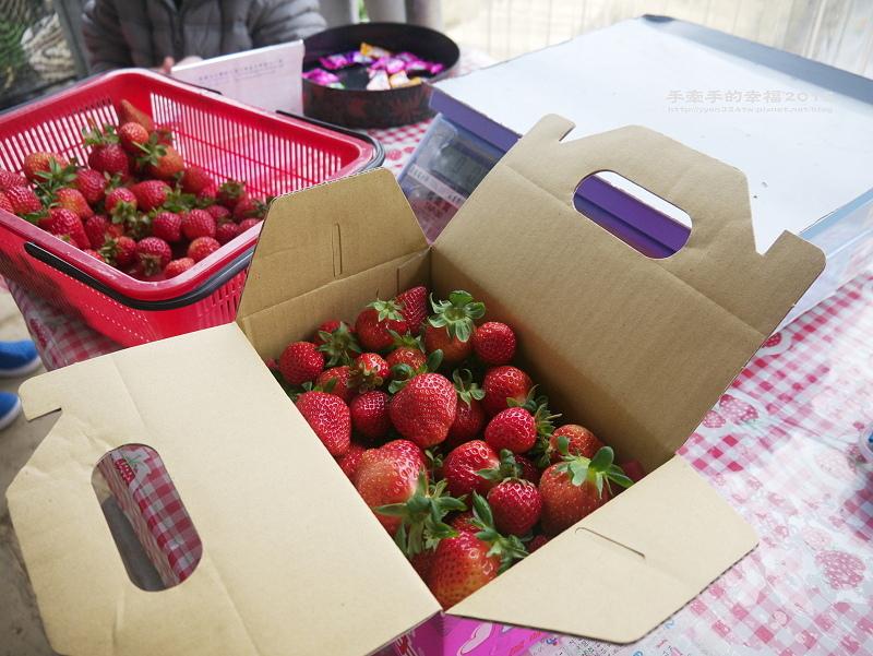 無名草莓園150223016