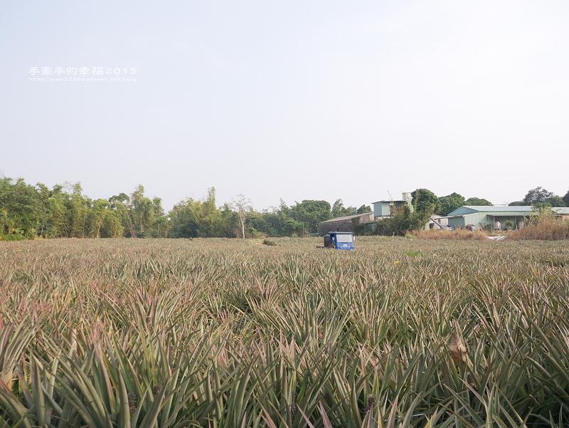 金桔農莊150102038