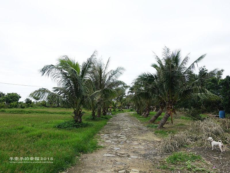 椰林之家150719034