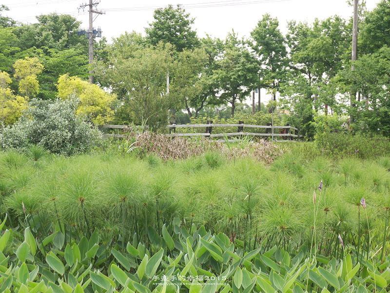 保健植物園140419028