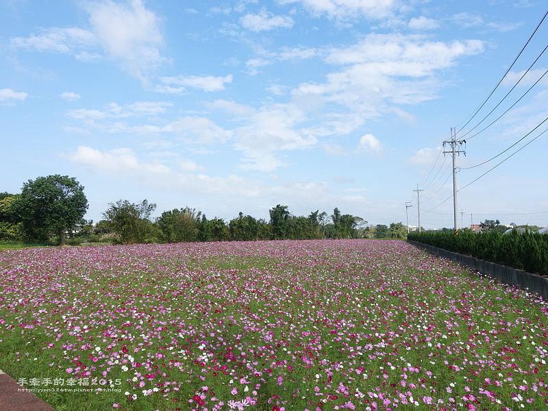 溪海花卉151122001