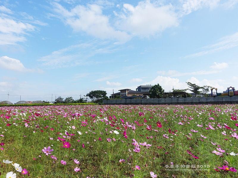 溪海花卉151122003
