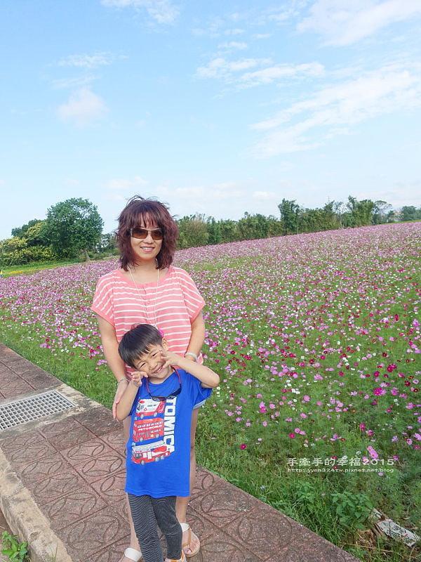 溪海花卉151122008