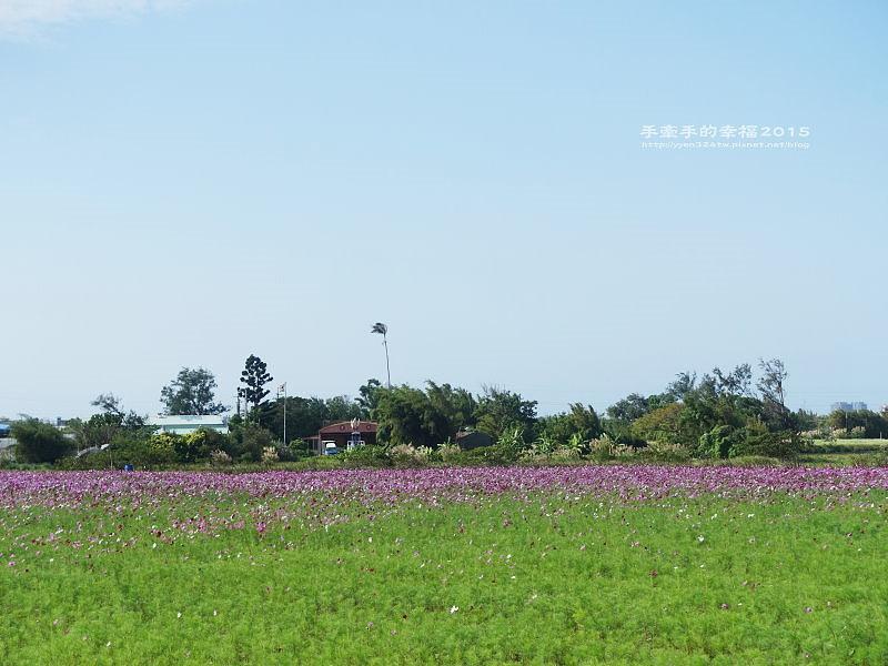溪海花卉151122009
