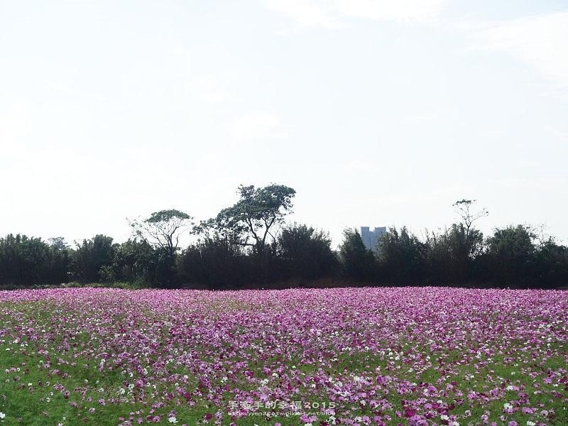 溪海花卉151122010