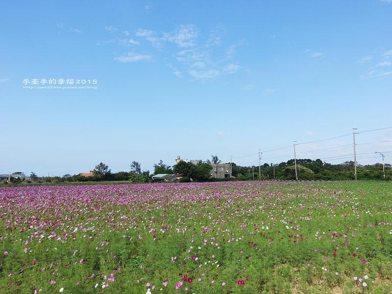 溪海花卉151122011