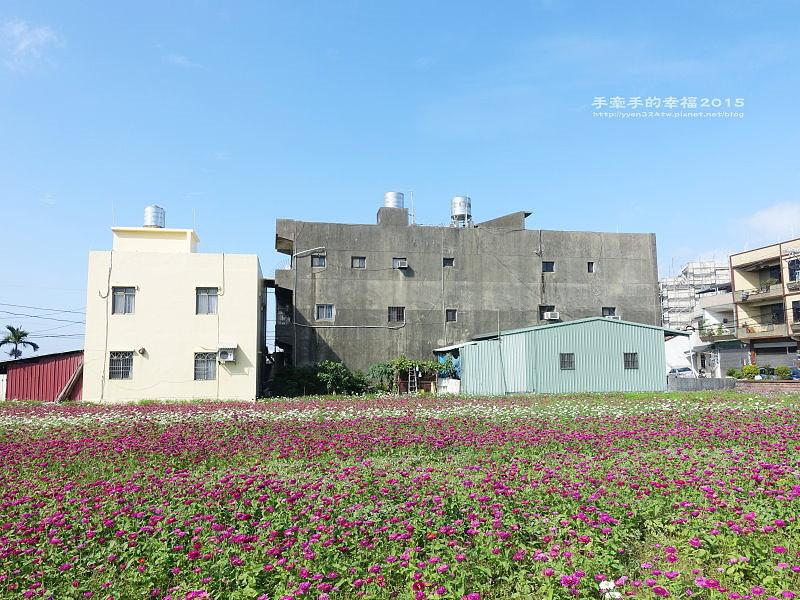 蘆竹花海151122003