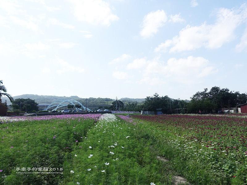蘆竹花海151122013
