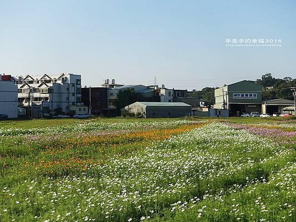 2016桃園花彩節蘆竹場161111003