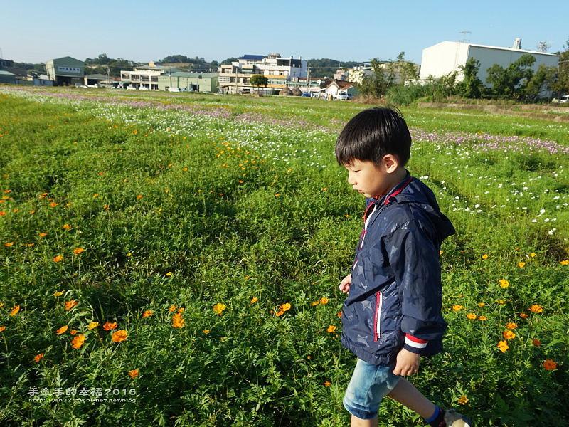 2016桃園花彩節蘆竹場161111006