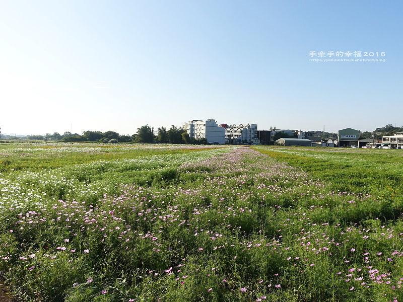 2016桃園花彩節蘆竹場161111005