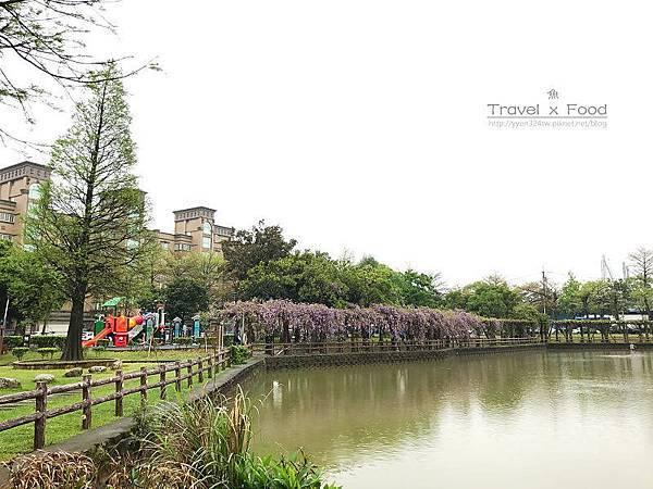 大湖公園紫藤花170411001