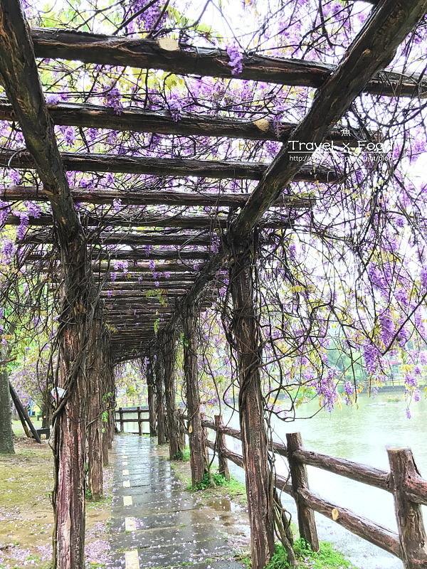 大湖公園紫藤花170411003