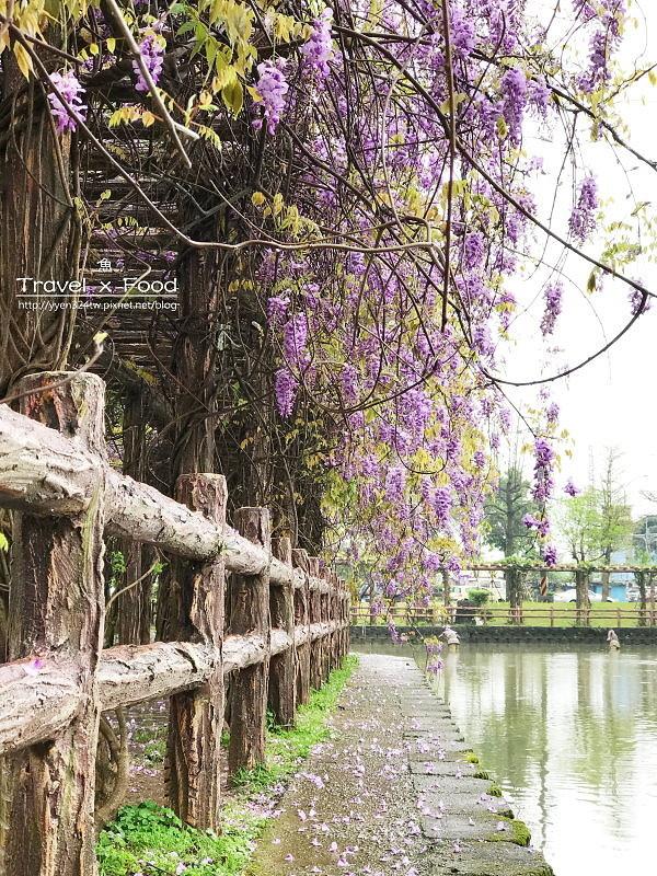 大湖公園紫藤花170411005