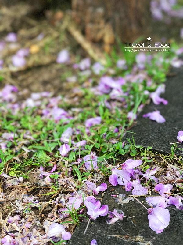大湖公園紫藤花170411007