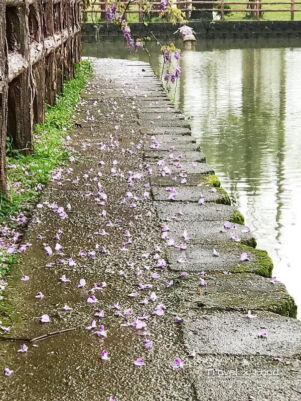 大湖公園紫藤花170411006