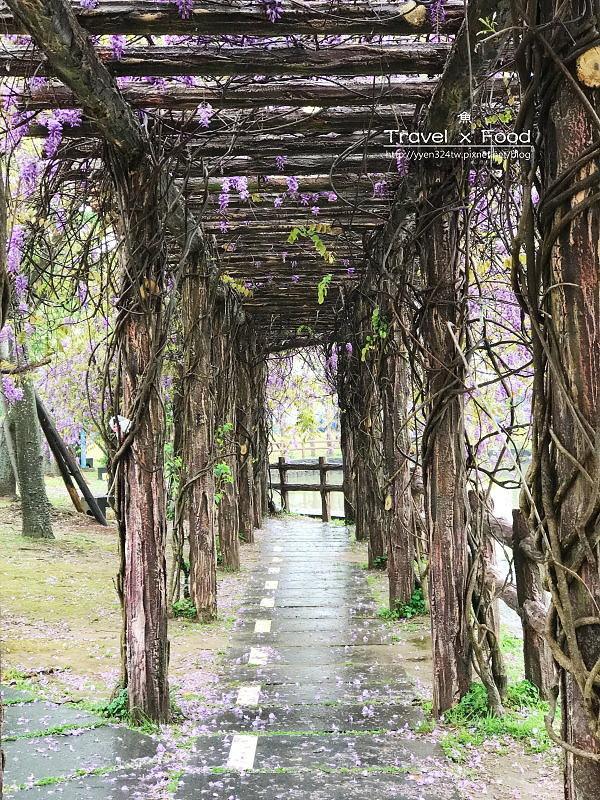 大湖公園紫藤花170411008