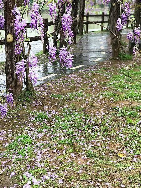 大湖公園紫藤花170411010