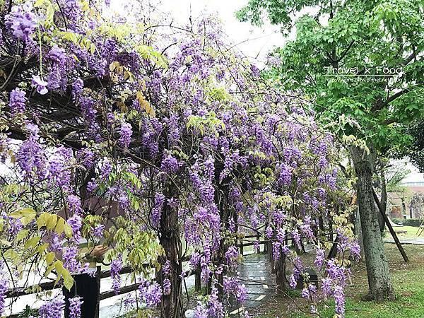 大湖公園紫藤花170411013