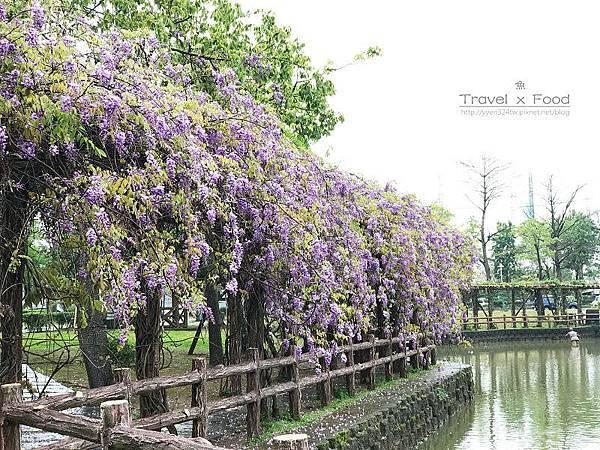 大湖公園紫藤花170411014
