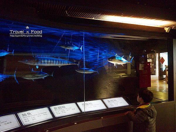 柴魚博物館150110006